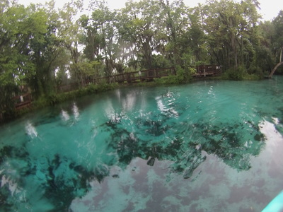 Three Sisters Springs Florida Map.Kayak To Three Sisters Spring In Crystal River